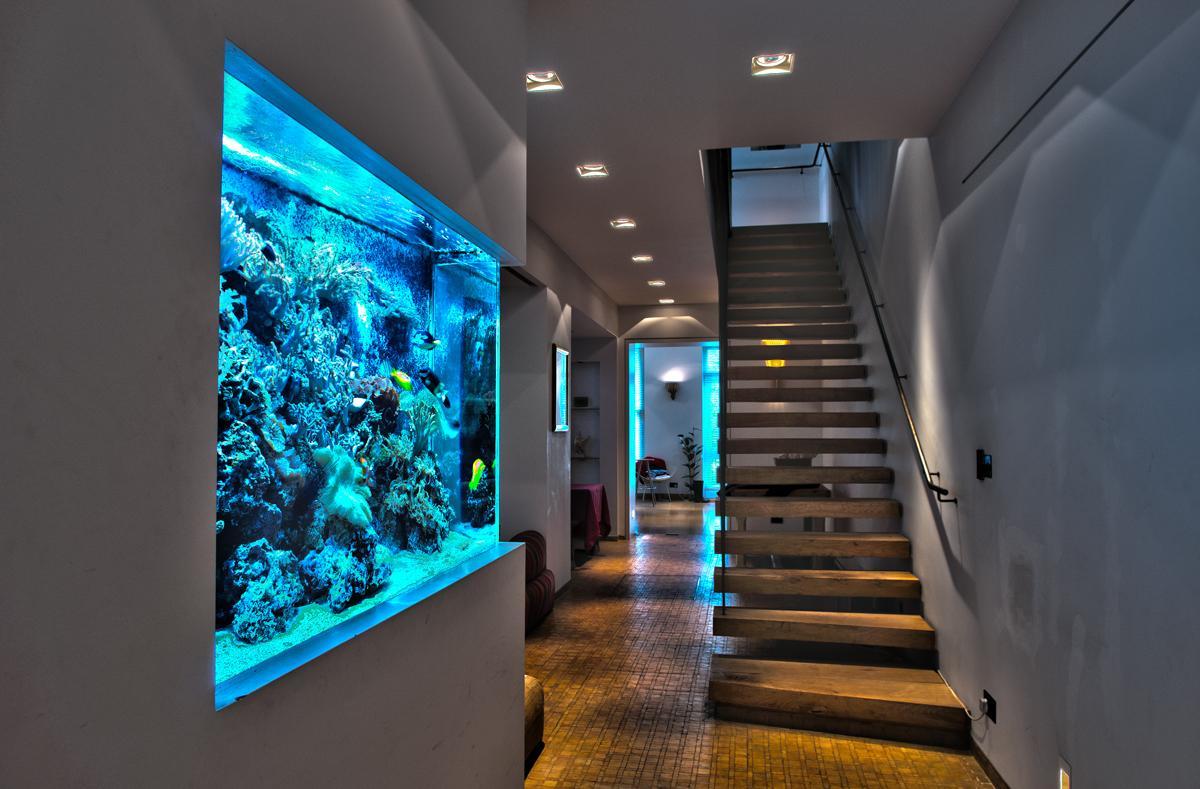 amazing-wall-aquarium.thumb.jpg.0dd00f28