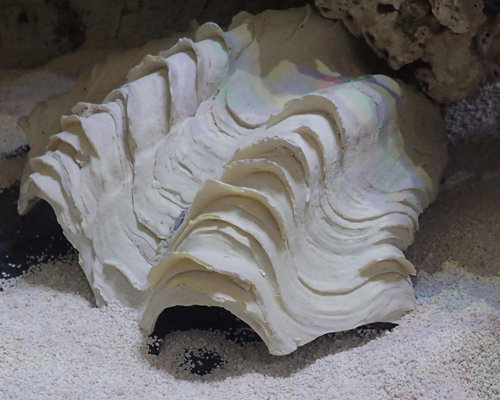clam2.jpg