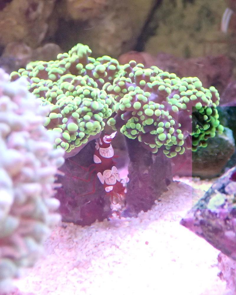 sexy-shrimp.jpg
