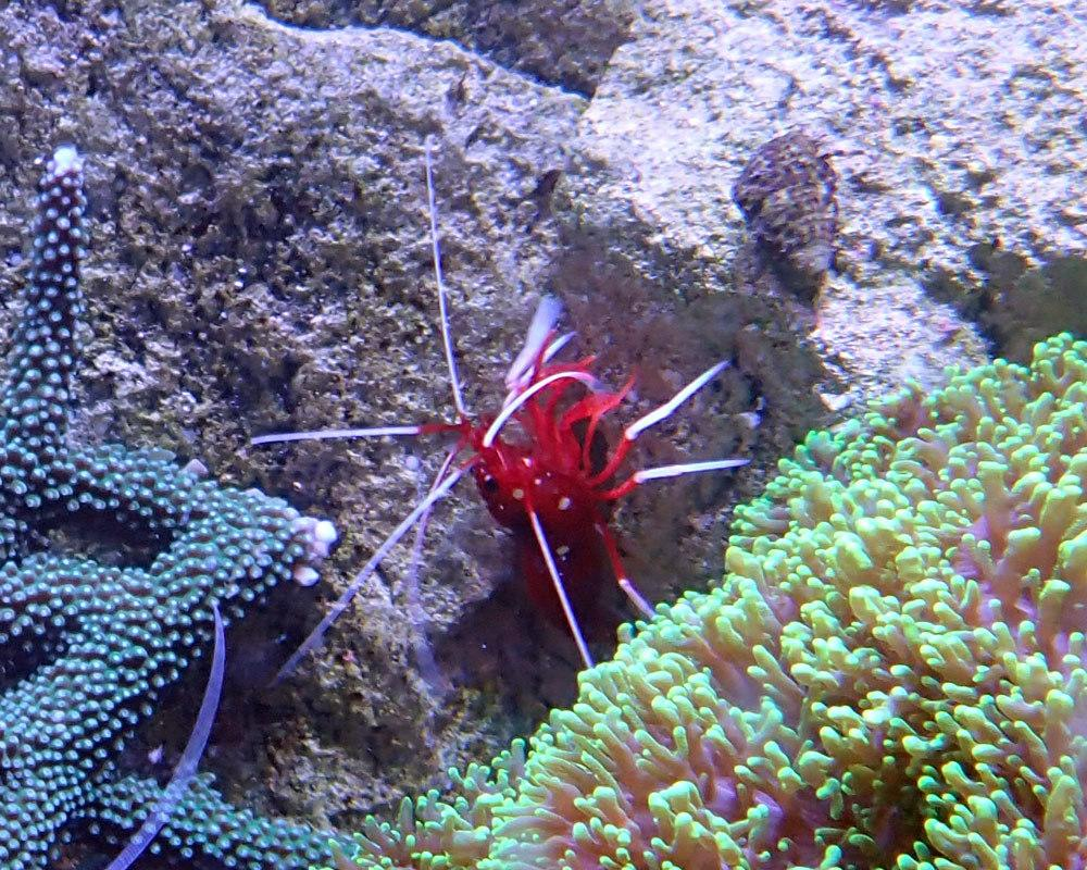 shrimp3.jpg