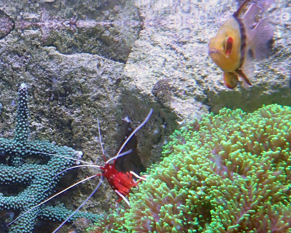 shrimp3b.jpg