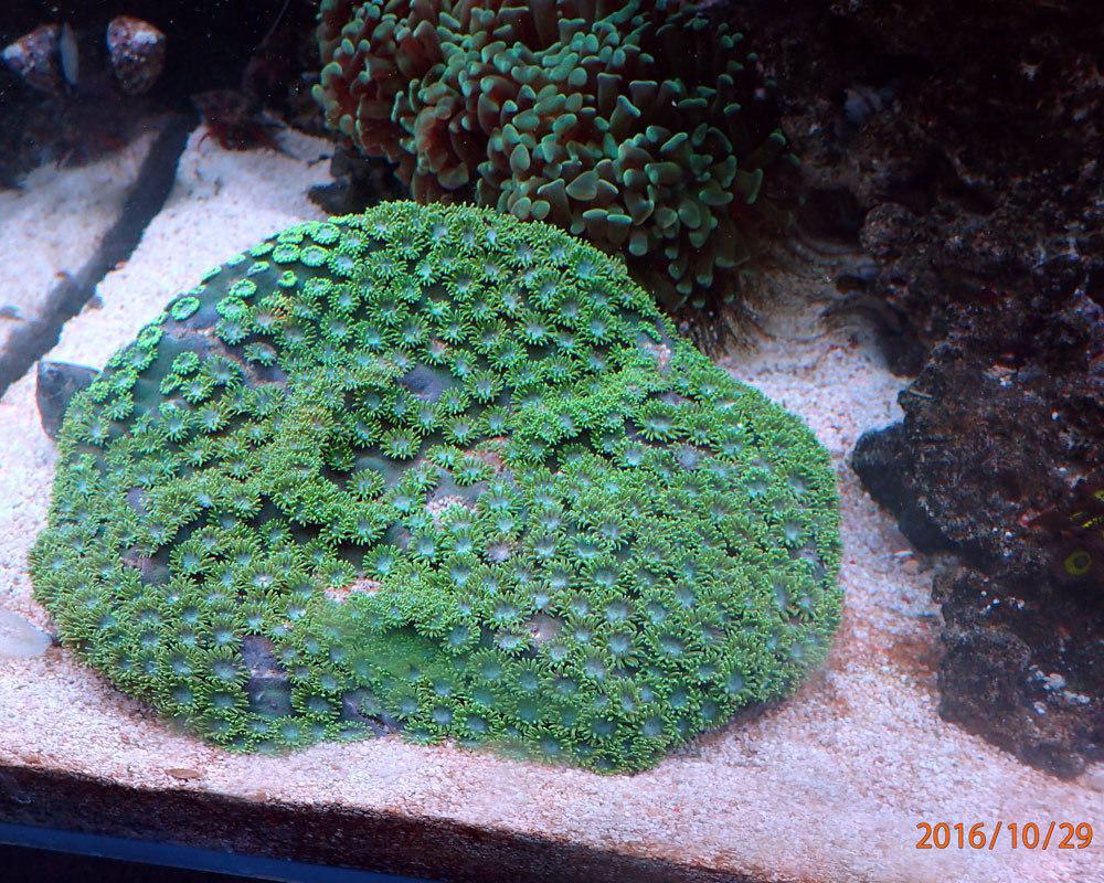 corall1.jpg