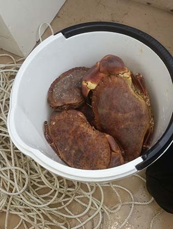 krabba.jpg