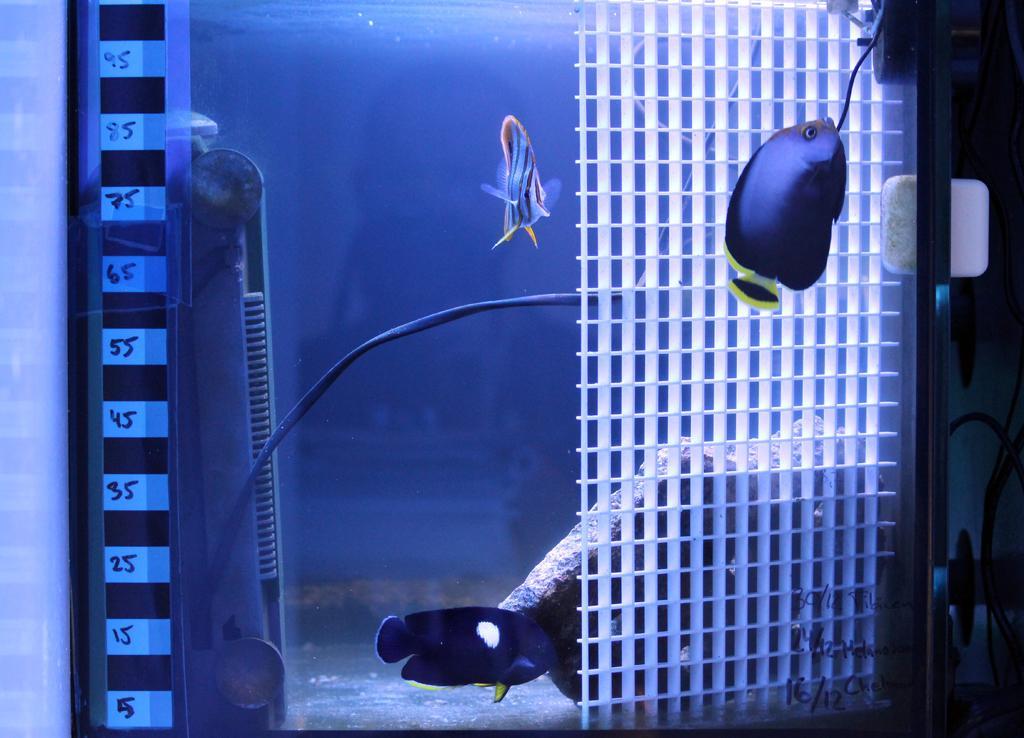 fiskkarantan.jpg