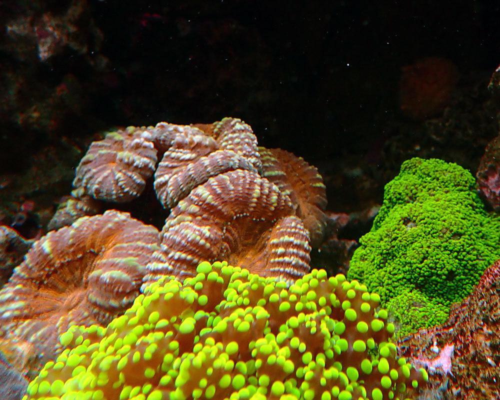 coral1.thumb.jpg.168bef4f060c39b85886ebea405739d1.jpg