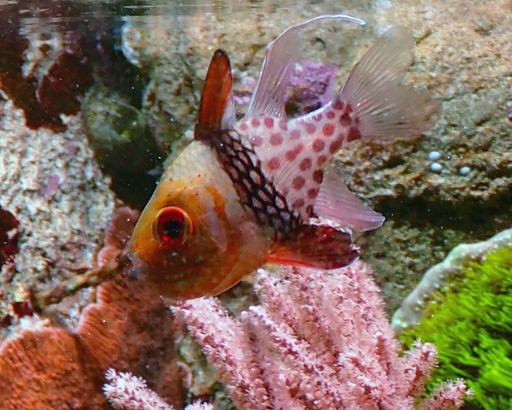 fish-after-6.thumb.jpg.36c85772473c297fe0d8c223983a4611.jpg