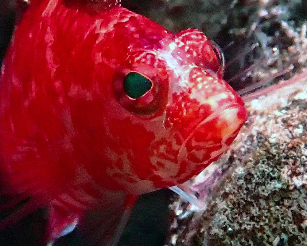 fish1.thumb.jpg.9618454de537034399063c10d0886ac3.jpg