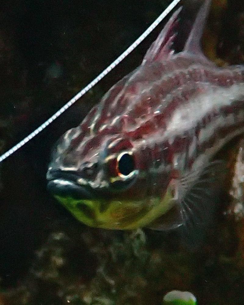 fish3.thumb.jpg.8a1ee6dda4f6b4a551970feca51aeaf0.jpg
