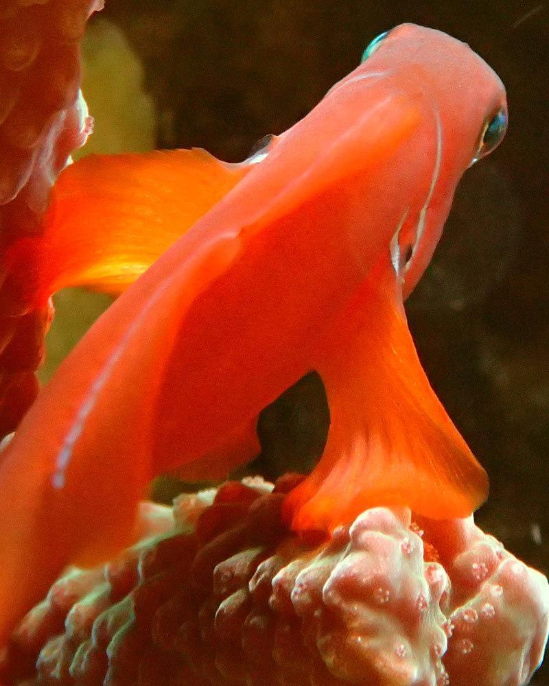 fish4.thumb.jpg.811652fd46c1233324cf0ee6d2c4bf19.jpg