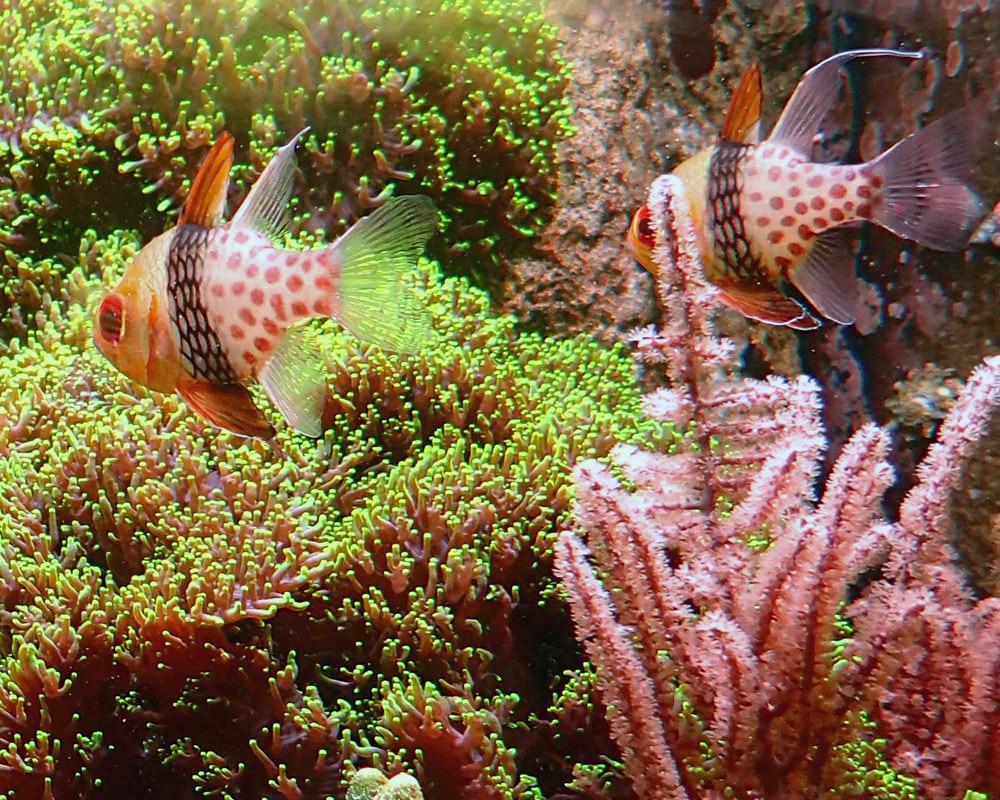 fish5.thumb.jpg.79828534177f55d921fe3a826df89423.jpg
