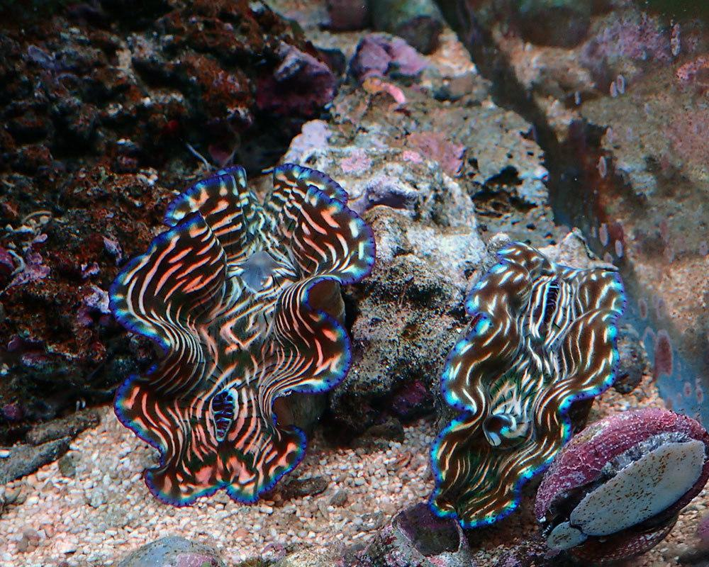 clams.thumb.jpg.d0c0f7f83e5682f613d7d55fc7ac4107.jpg