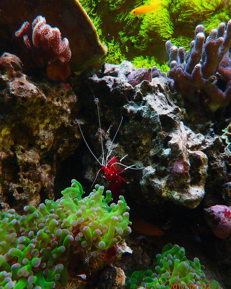 shrimp.thumb.jpg.5152b05eb6789d190cc4668eee6f53a5.jpg