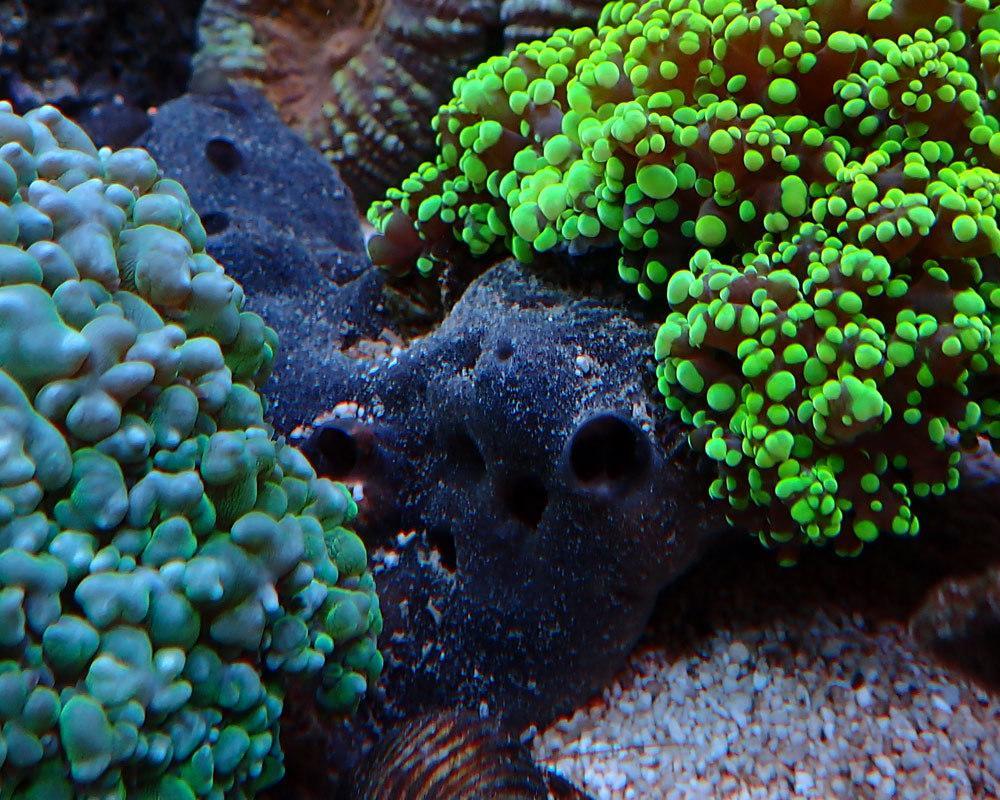 sponge.thumb.jpg.bac11488021eee45eb2ea755dbdcb3e4.jpg