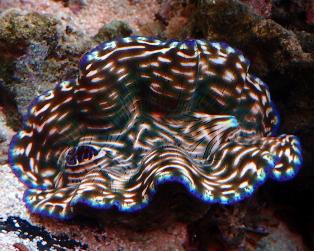 clam2.jpg.89efa89666156e586dd83846aaf069c1.jpg
