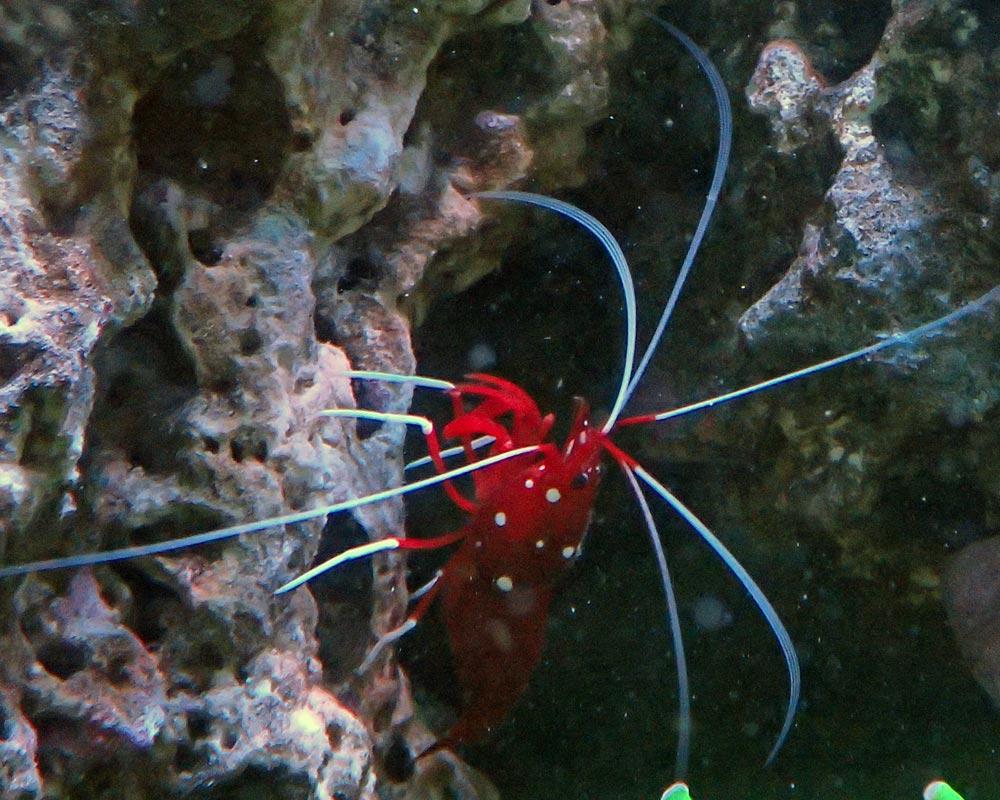 shrimp.jpg.687669e5abe2608ca8739a766aa39171.jpg