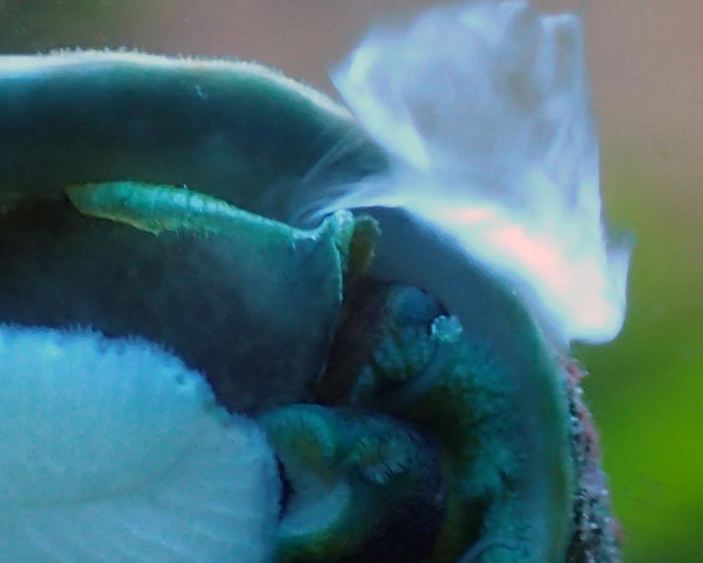 snail-sex.jpg.f09332be3fb4d73922b1dc3d679bec9e.jpg