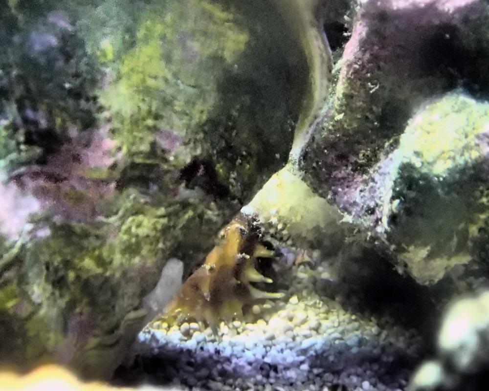 sea-cucumber.jpg.508d3c80b6a6399373e34770a5edd5c9.jpg