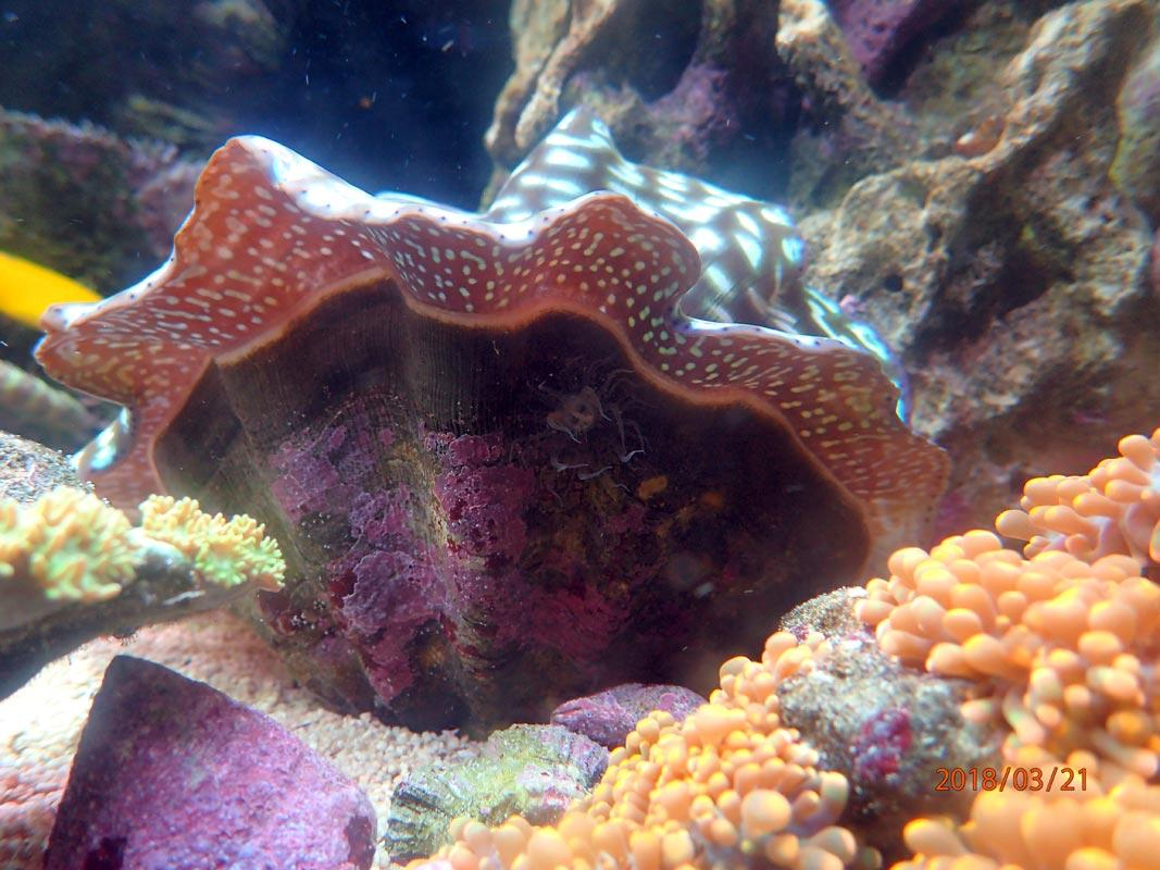 clam.jpg.9dbd11d815ac913a13de4d34681b184f.jpg