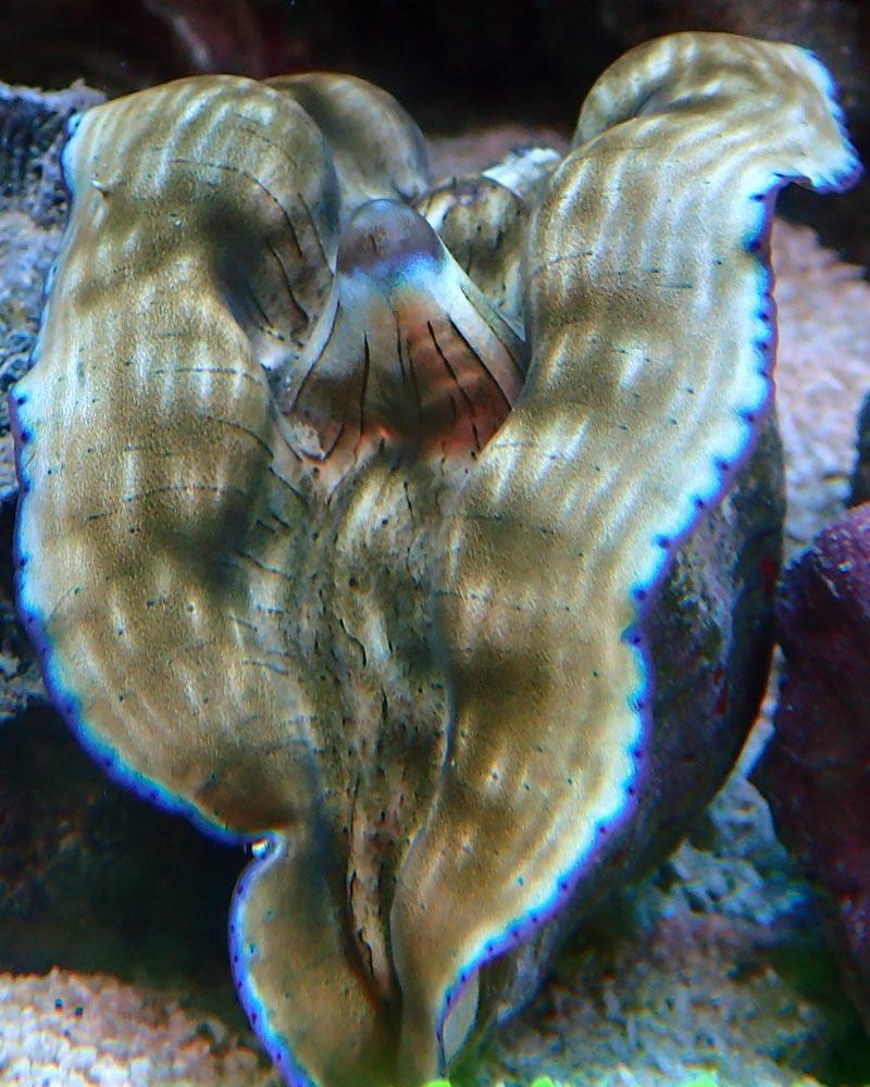 clam-3.jpg.7011f4fb96ae1c2574736b254889f79a.jpg