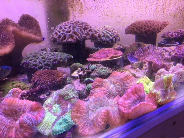 coral_mix.jpeg