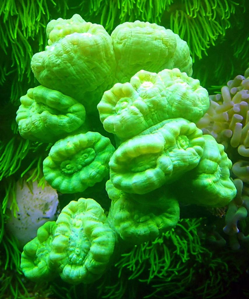 coral0.jpg.6b82064583121b30727a4ffc3c7989fe.jpg