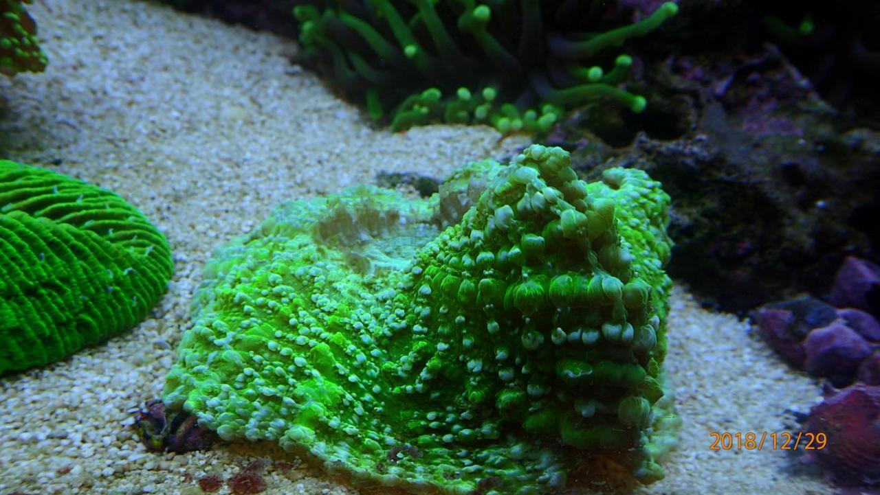 coral4.jpg.f5f2e1bf0ff3c88e13e9e5ad69b3ef46.jpg