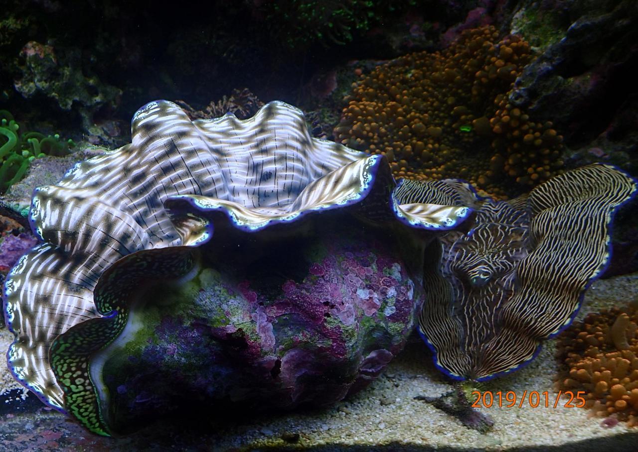 clam.jpg.46b3adebc07afc9f5b2e61b775fda92a.jpg