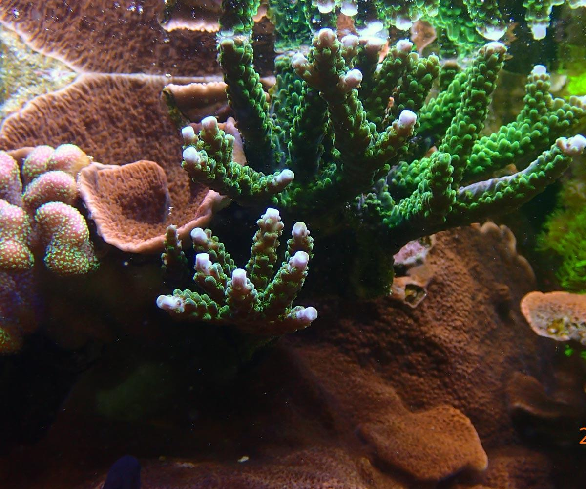 coral3.jpg.f76afa71d502055707c25d8062092939.jpg