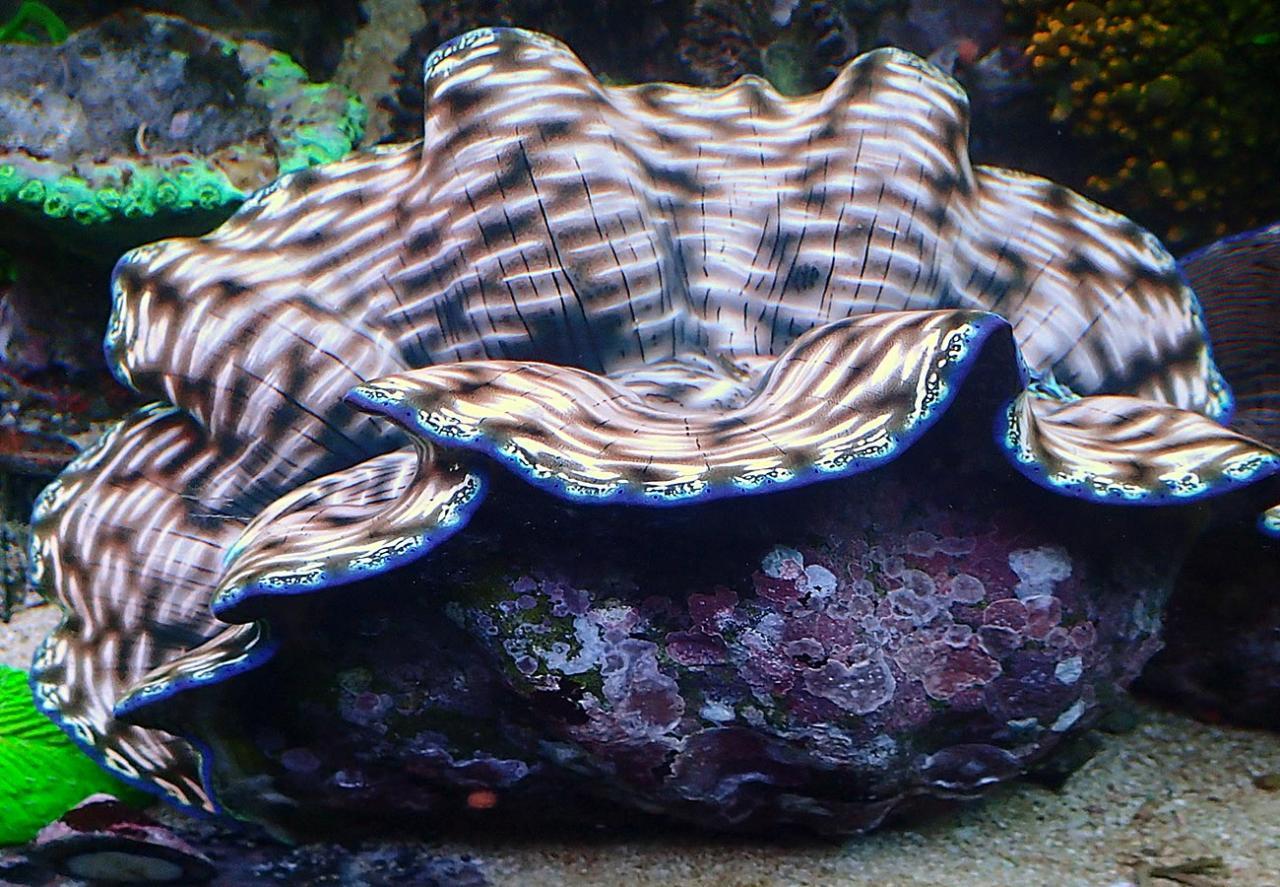 clam.jpg.952ceed1f11448cdf848ba59c19f3056.jpg