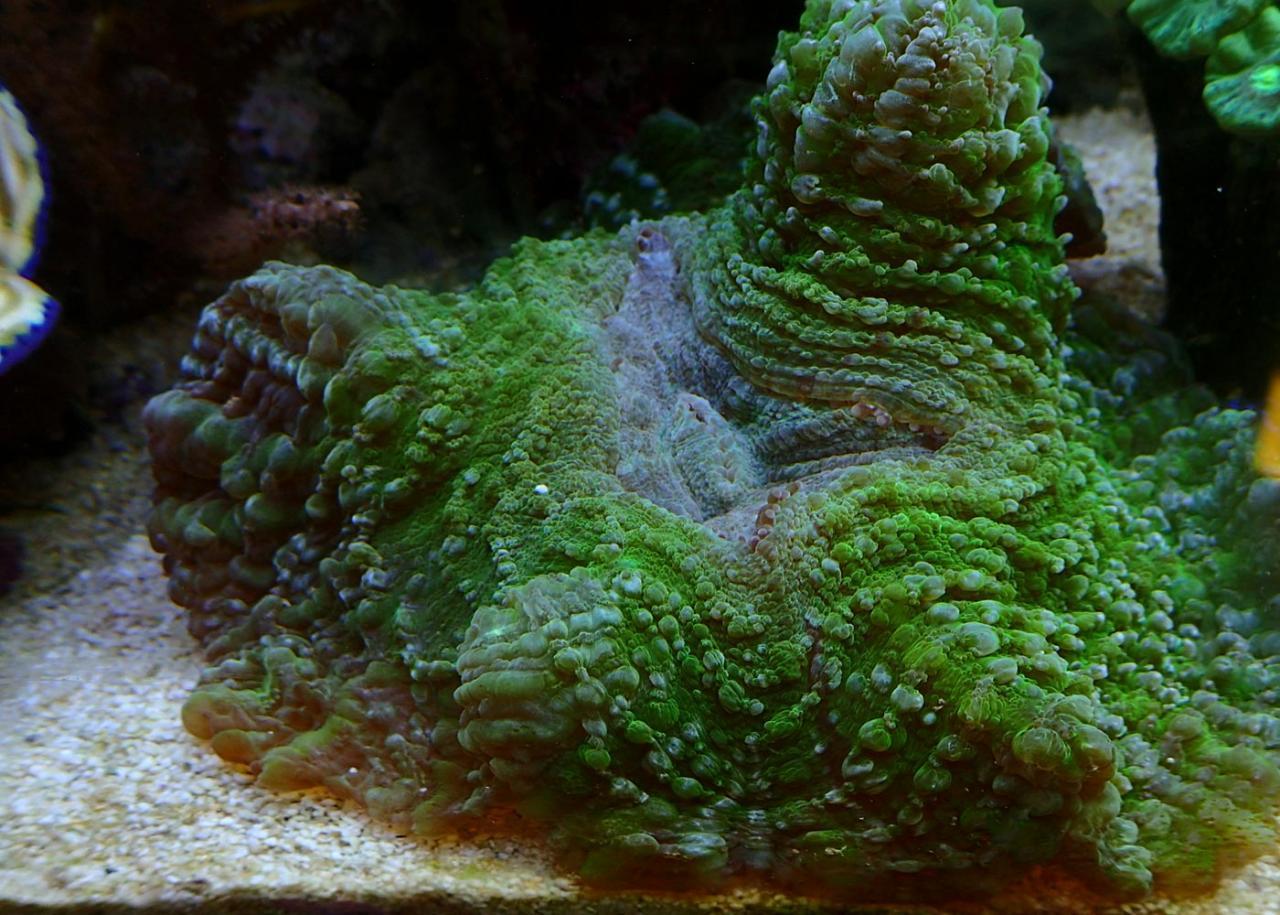 coral12.jpg.f6d8105412bcc84ddd5fdce8fefd287c.jpg