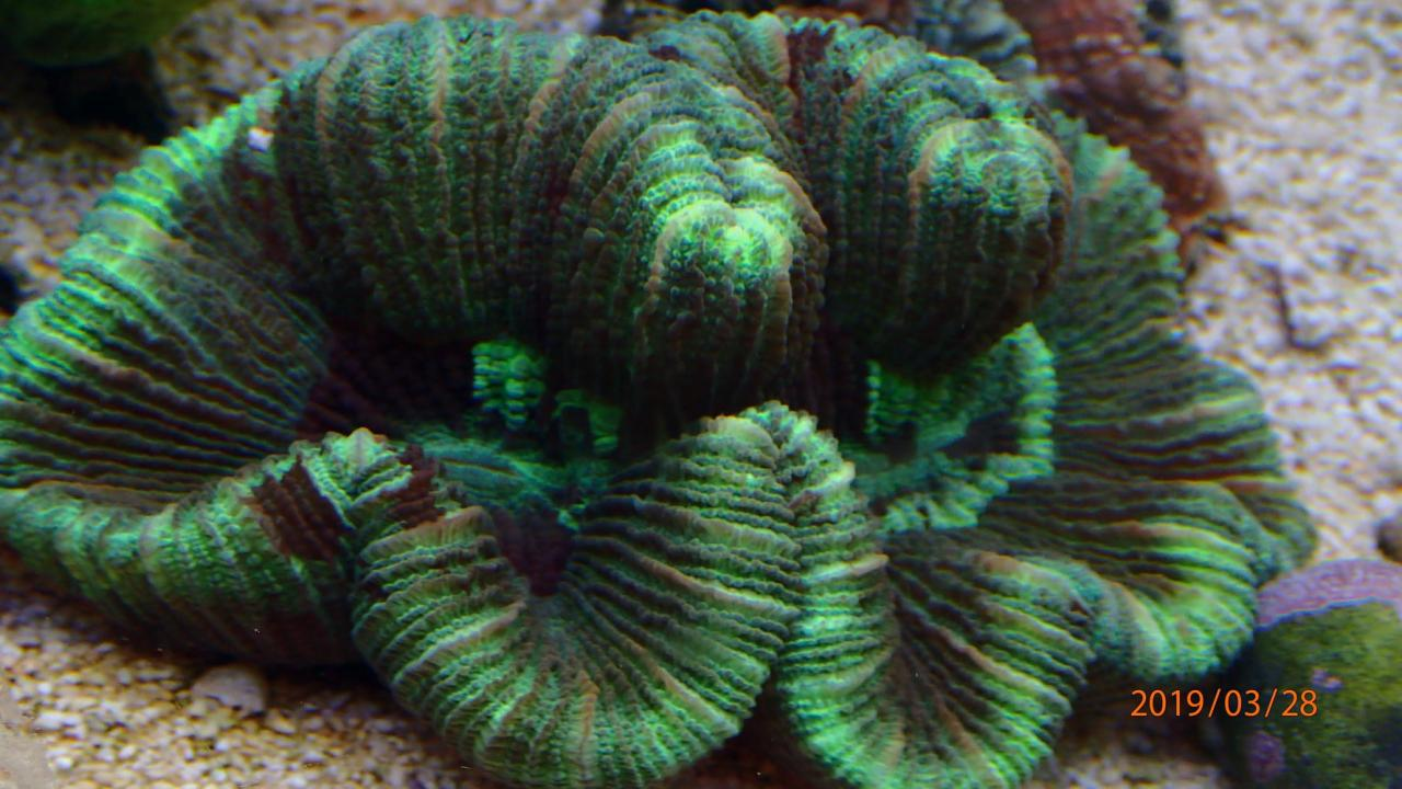 coral13.jpg.618e42e5119690492e46b9a181ae149f.jpg