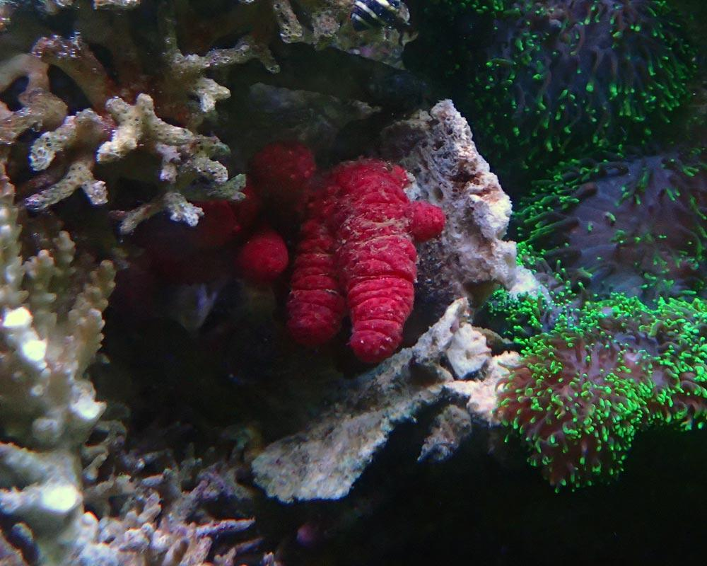 coral2.jpg.82186b2e82f2bdf62289a0ae71863bd8.jpg