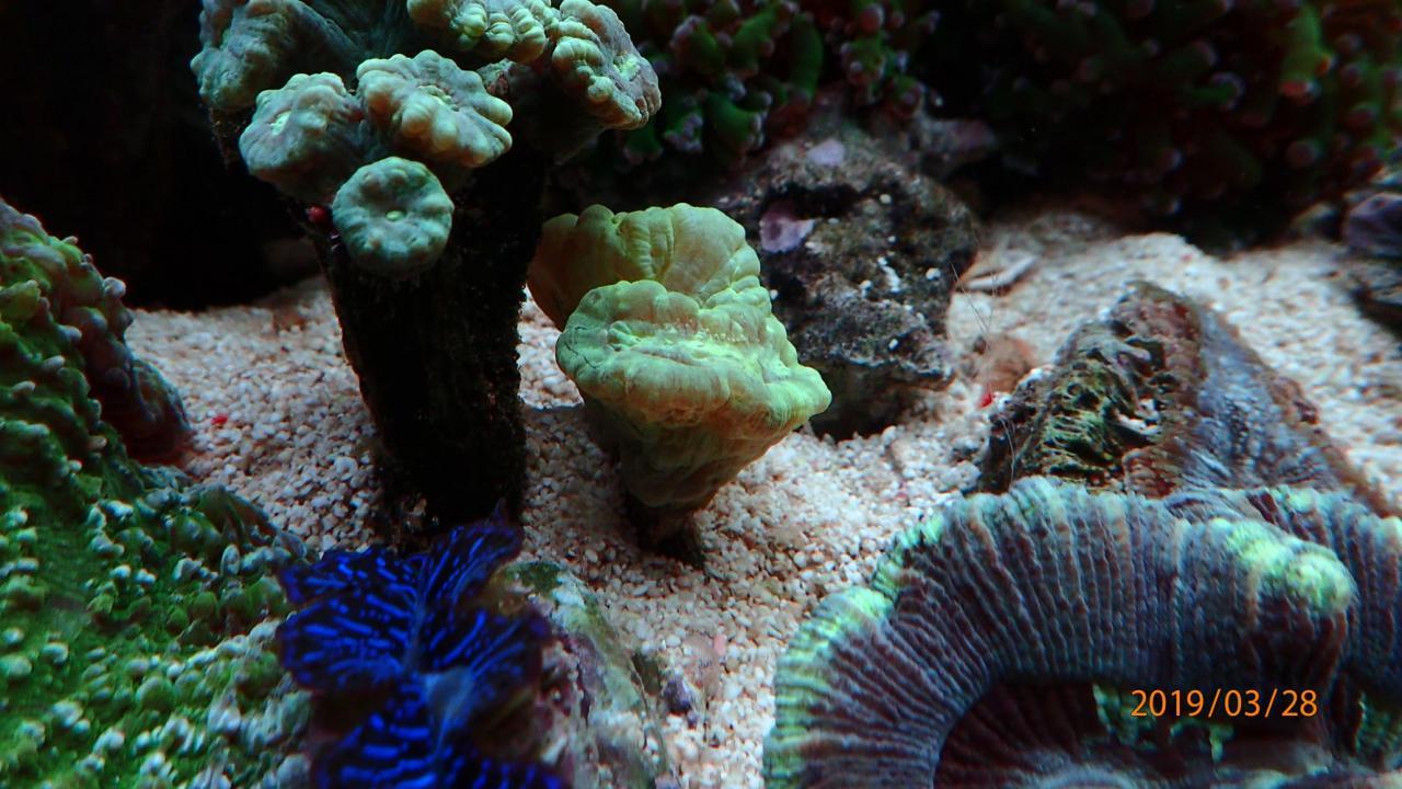coral3.jpg.2d78904e5dd0dec0a2cd8ebe42a0e0ef.jpg