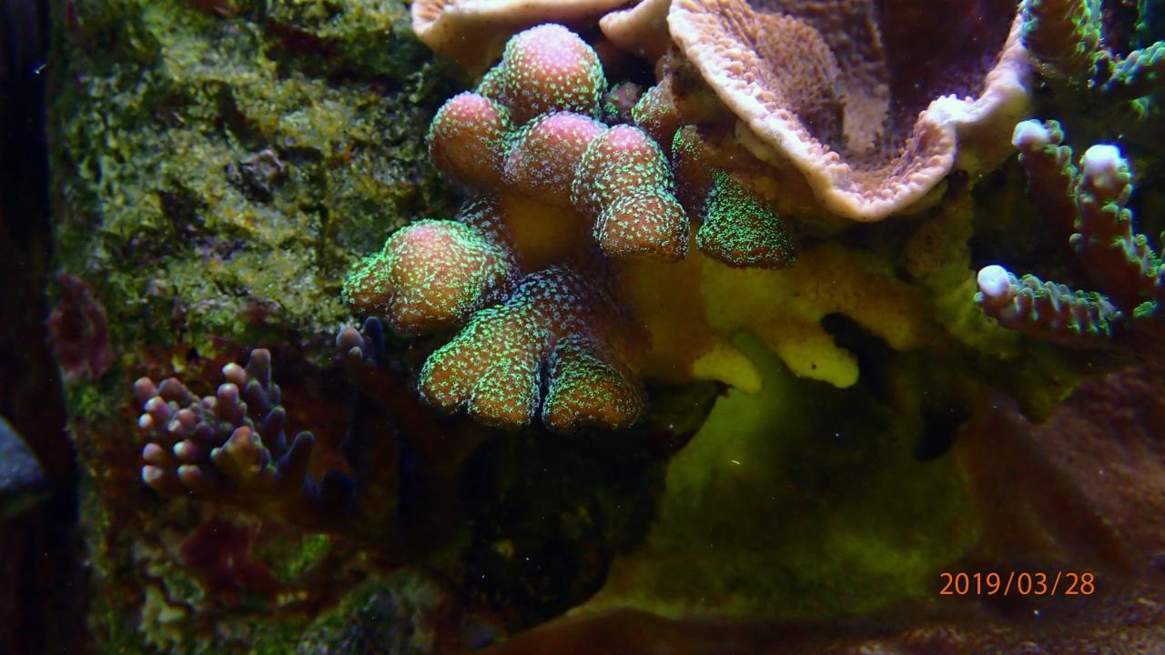 coral6.jpg.2fad874bacdcdc93b1795ccdfdddbc2c.jpg
