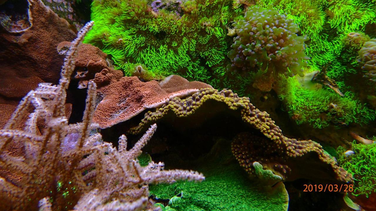coral7.jpg.eb1ae29c90ba316f088b2a61777879e2.jpg