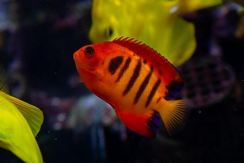 Akvarie-1.jpg