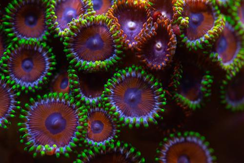 Akvarie-13.jpg
