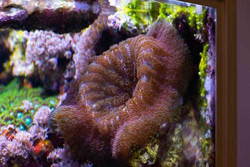 Akvarie-7.jpg