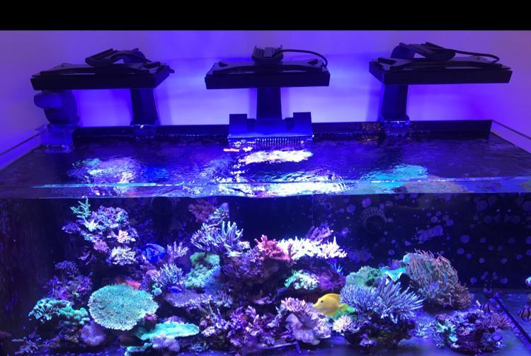 akvarie.jpeg