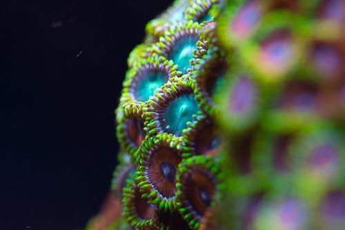 Akvarie-12.jpg