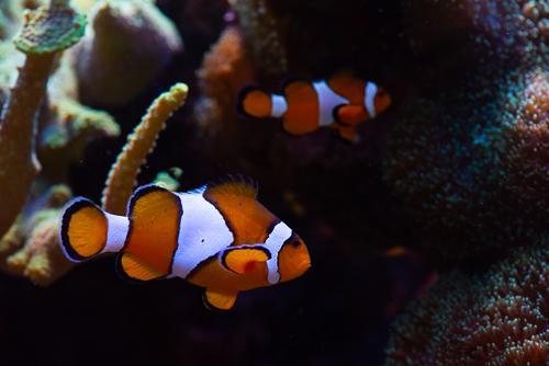 Akvarie-2.jpg