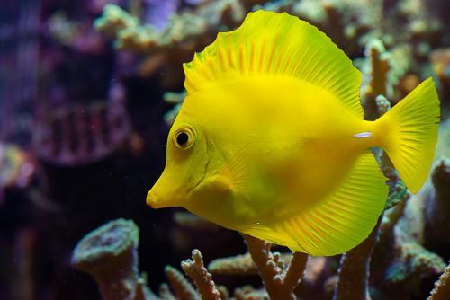 Akvarie-3.jpg
