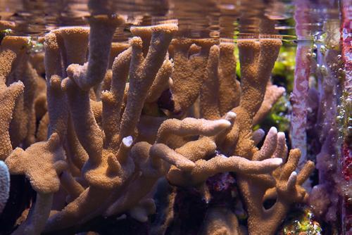 Akvarie-8.jpg