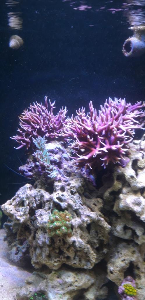 Korall 3.jpg