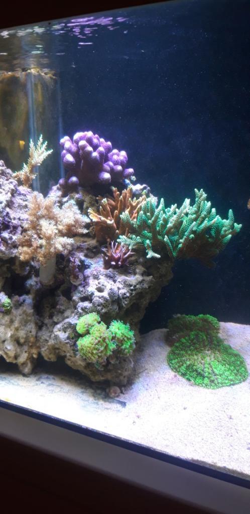 Korall 4.jpg