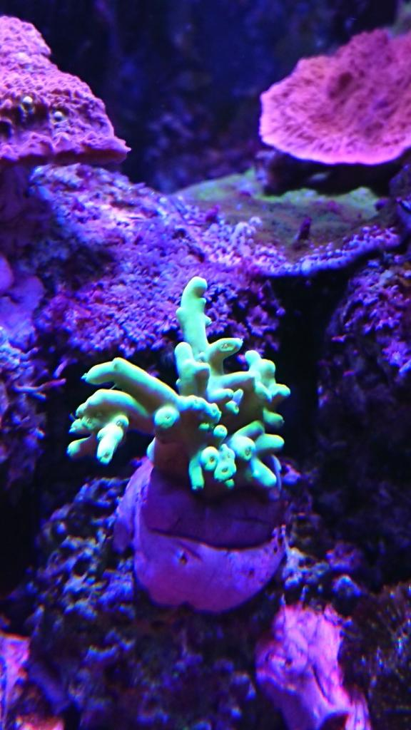 Acro gulgrön.jpg