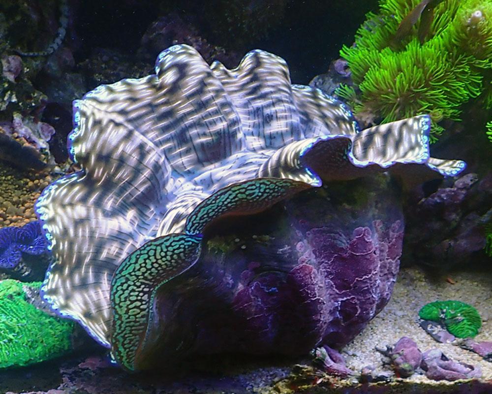 clam.jpg.6ca519b98ad8d2b5af0028f1403e2f76.jpg