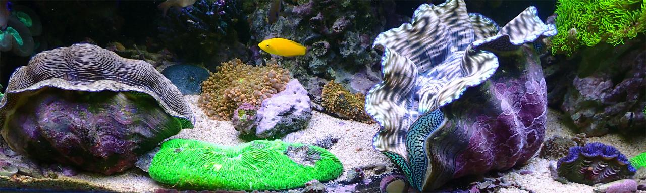 3-clams.jpg.719066521ef60b764ccf8de00b76ba1d.jpg