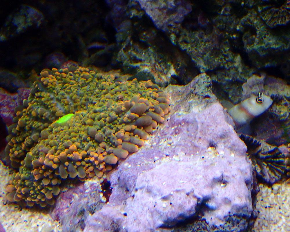 coral1.jpg.cda74e76aaf51aaa543d4f841c77c028.jpg