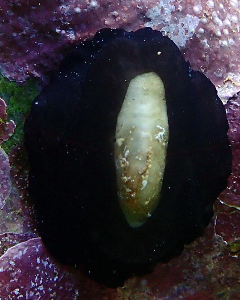 snail.jpg.c7337412818fb84e86968267b2a15274.jpg